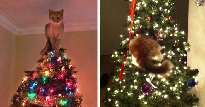 decorating-cats-destroying-trees-christmas-fb__700-png.jpg